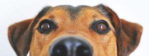 Tierfreundliche hotels mit hund